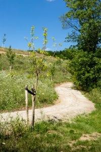 paden meanderend op natuurbegraafplaats eygelshof