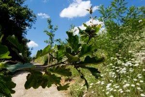biotop eygelshof naturfriedhof