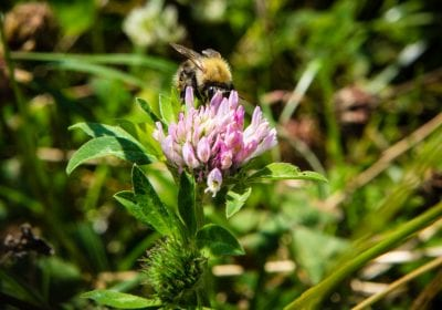 bijen natuurbegraafplaats eygelshof