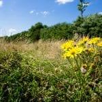 Bloemen natuurbegraven