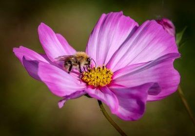 bloem & bij (foto Sanne Bastiaan Net)