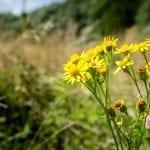 eygelshof natuurbegraafplaats bloemen