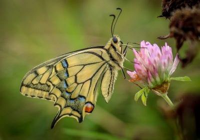 Vlinder (foto Sanne Bastiaan Net)